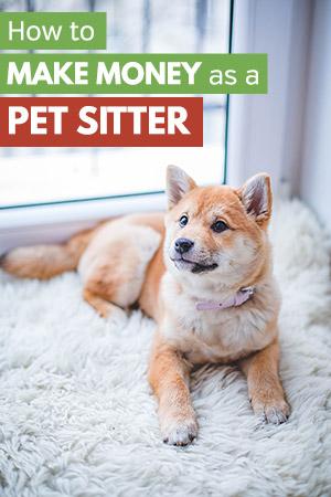 Make Money as a Pet Sitter