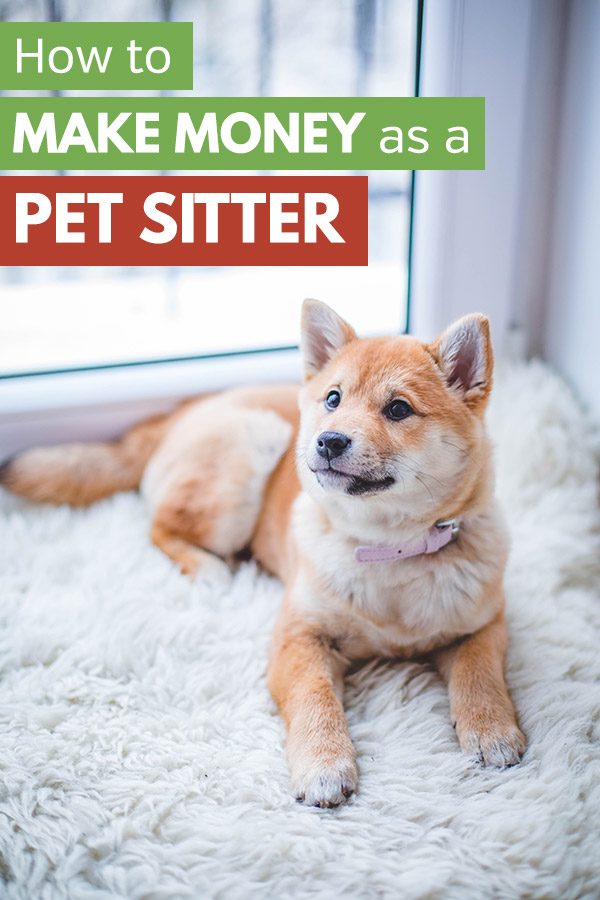 How to Become a Pet Sitter and Make Extra Money. Are you looking for a side hustle? This story is amazing! This woman, Lily, makes more than $40k per year with a pet sitting side hustle. She shows how to make money as a pet sitter and make money as a dog walker. The article also covers things you need for a doggie daycare, make money with rover, and how to get paid to be a pet sitter. It\'s unbelievable! #sidehustle #makemoney #entrepreneur #homebusiness